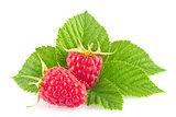 Ripe organic raspberry with green leaf