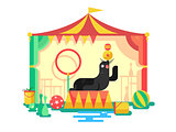 Fur seal in a circus