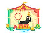 Fur seal in a circus