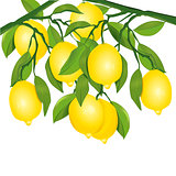 Lemons on tree illustration