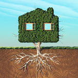 House shaped green tree