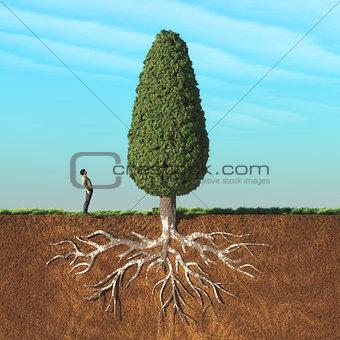 A man look up a big tree