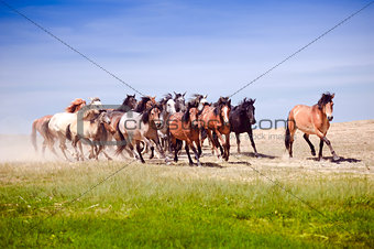 A herd of young horses running very quickly