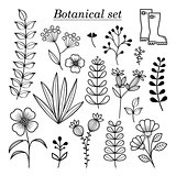 Botanical illustration, hand drawn wild flowers and herbs collection, vector botany design elements