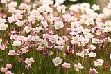 bright flowers flowering moss