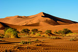 Stunning landscapes of the Namib desert