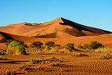 Stunning landscapes of the Namib desert