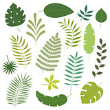 Vector set of tropical leaves.