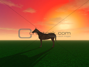 A horse is grazing in a meadow