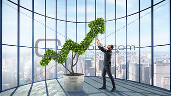 Businessman cares for a big plant shaped as an arrow
