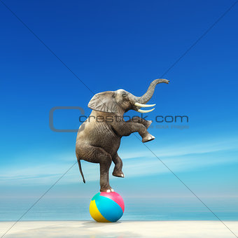 An elephant on a beach ball