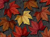 Autumn Leaves I
