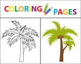 Coloring book page. Palm. Sketch outline and color version. Coloring for kids. Childrens education. Vector illustration.