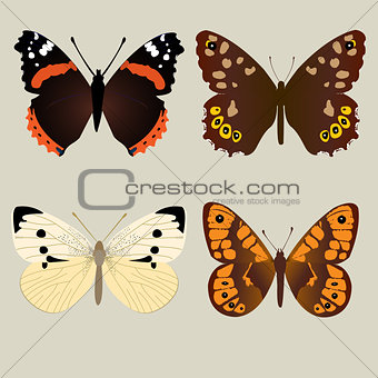 Four different beautifully butterflies