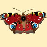 Illustration with butterfly Peacock Eye