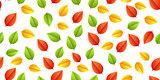 multicolored leaves autumn