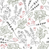Herbs seamless pattern. Herbal botanical outline sketch.