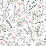 Herbs seamless pattern. Herbal botanical outline sketch.