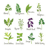 Set of herbs 2  isolated
