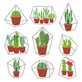Geometric florarium with succulents set. Vector illustration.