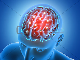 3D male figure with brain parts  highlighted