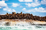 Wild sea lions on the island