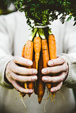 Fresh carrots and farmer