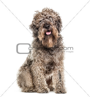 Cross-breed dog sitting and panting, isolated on white