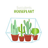 Geometric florarium with succulents set. Vector illustration.
