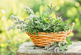 Fresh herbs in a basket outdoors