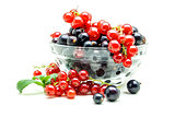 Glass vase with black and red currant on white background