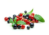 Black and Red Currants on white background