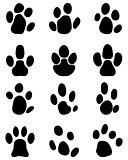 footprints of tapir