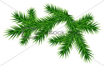 Green juicy one pine branch
