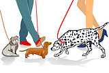 Walk with dog illustration