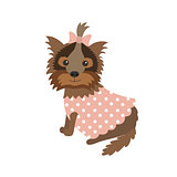 dog Yorkshire Terrier in clothes sitting