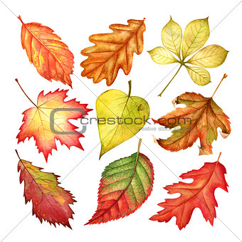 Beautiful watercolor colorful autumn leaves isolated on white background