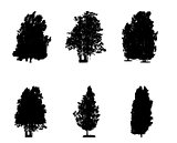 Set of Black and White Silhouette of Deciduous Tree, whose branc