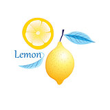 Vector fruit yellow lemon