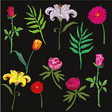 collection of colorful flowers. Vector illustration.