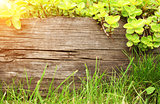 Summer background with old wooden plank