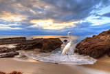 Great egret in Laguna Beach