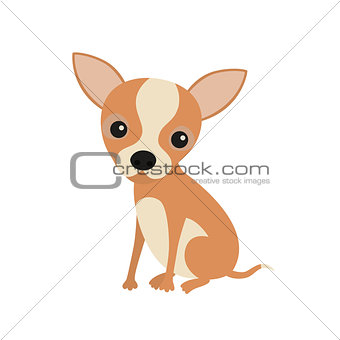 Little cute sitting chihuahua puppy. Little brown pocket dog, isolated on white background.