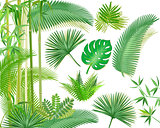 Exotic tropical plants illustration