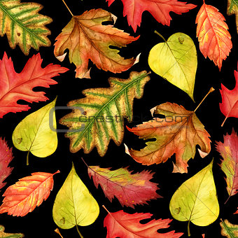 Seamless pattern with red, yellow and green-yellow autumn leaves on black background. Endless artwork hand-drawn. Floral wallpaper autumn plant forest. Watercolor illustration