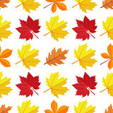 Vector seamless pattern with various colorful autumn leaves on a white background.