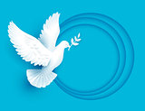White dove holds twig symbol of peace