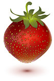 Red big ripe juicy realistic strawberry