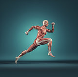 Male muscular system running