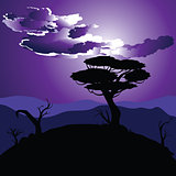 African Night Landscape